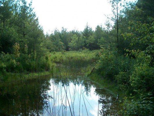 Wetland at G. G. Newton Nature Reserve