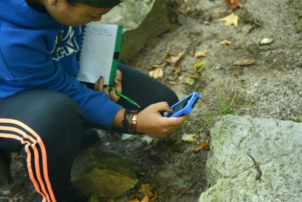 A Youth Council member submitting a salamander sighting using the ORAA app