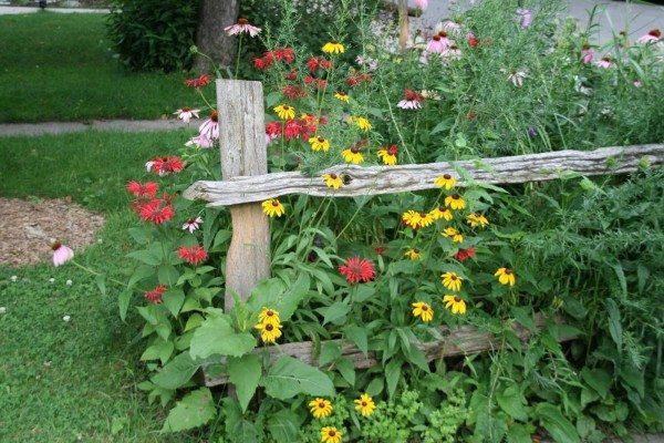 Wildflowers growing in a garden