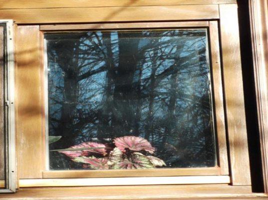 A reflective window that shows birds danger
