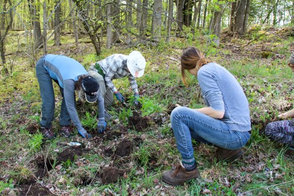 A group planting wildflowers at Kinghurst Forest