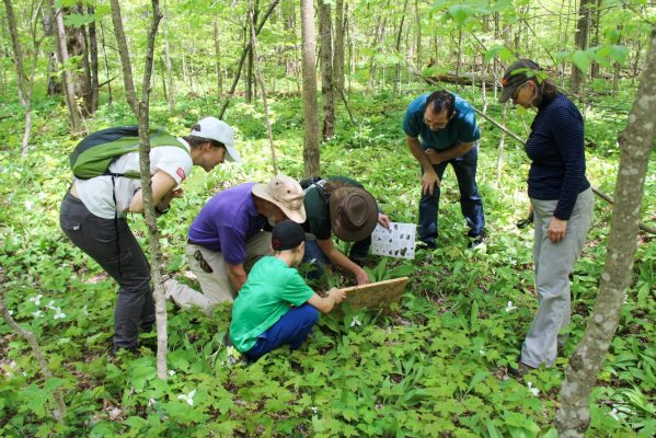 A group lifting a cover board looking for salamanders