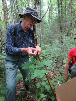 Bruce Dunn showing edible fungi