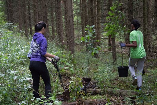 Two people planting trees at Willoughby Nature Reserve