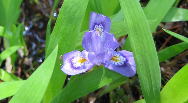 Violet coloured flower