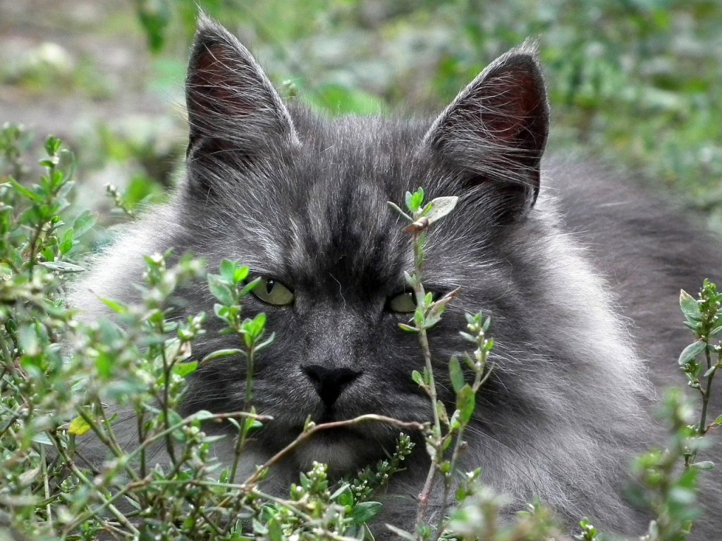 A cat in hiding in shrubs and grass
