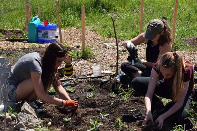 Members of the youth council planting pollinator friendly plants