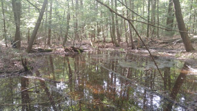 vernal pool and trees