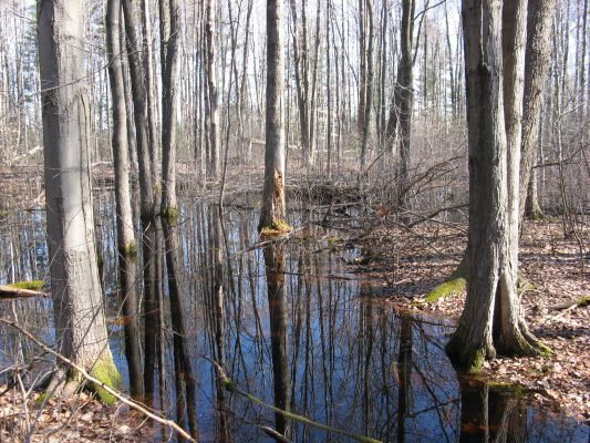 Vernal Pool in late autumn