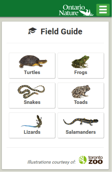 Image of the Ontario reptile and amphibian app field guide display screen that will help you identify your sighting.