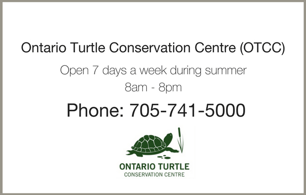 Ontario Turtle Conservation Centre is open 7 days a week, from 8 am to 8 pm. Call at 705-741-5000