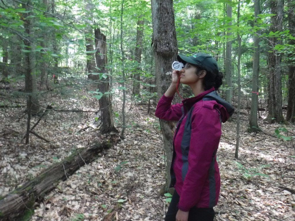 Measuring tree height with a clinometer