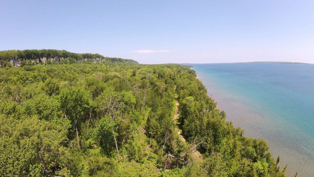 Aerial view of a forest along a shoreline