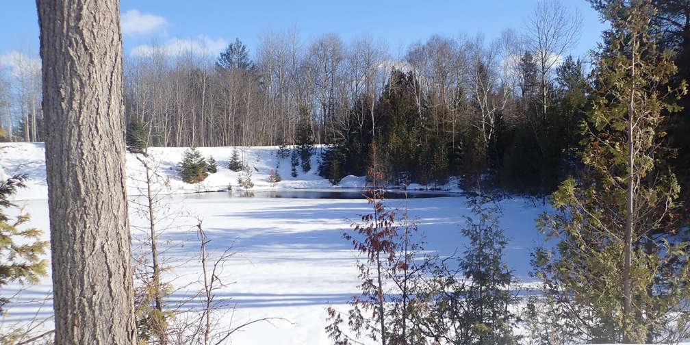 winter, wetlands, ponds