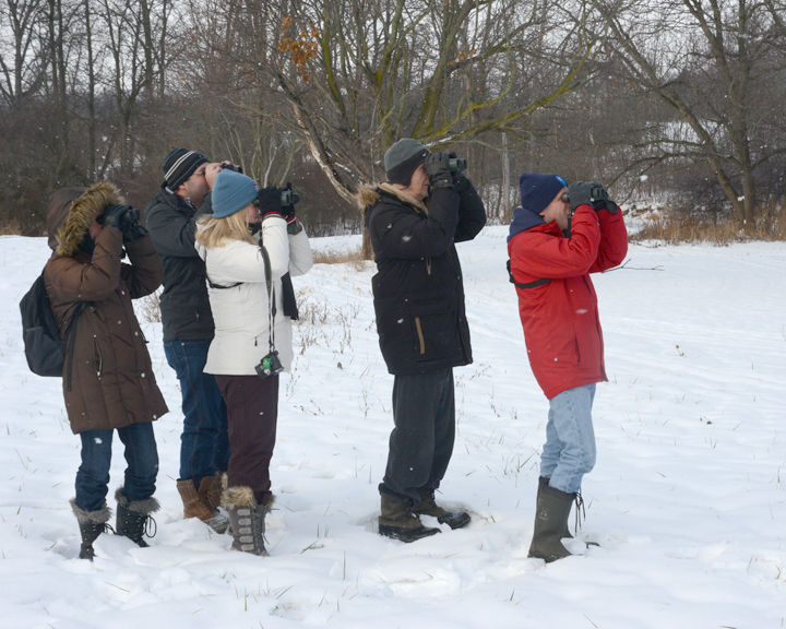 St. Catharines Christmas Bird Count