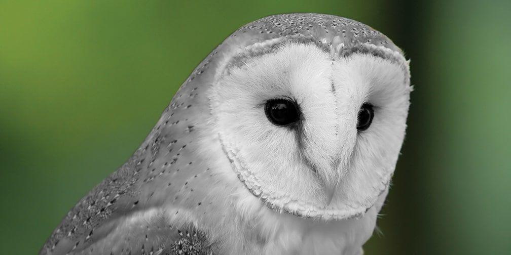 SOS: Save Ontario Species | Ontario Nature