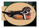 Hamilton Naturalist Club logo