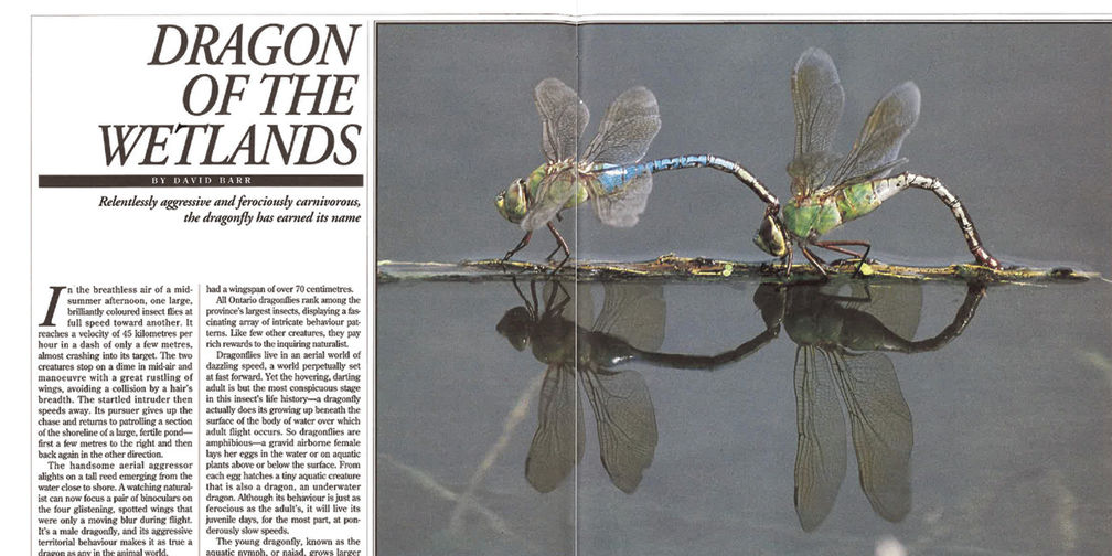 Dragon of the Wetlands article