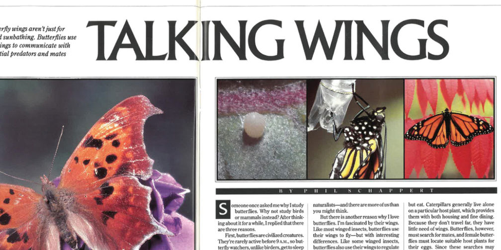 Talking Wings magazine article