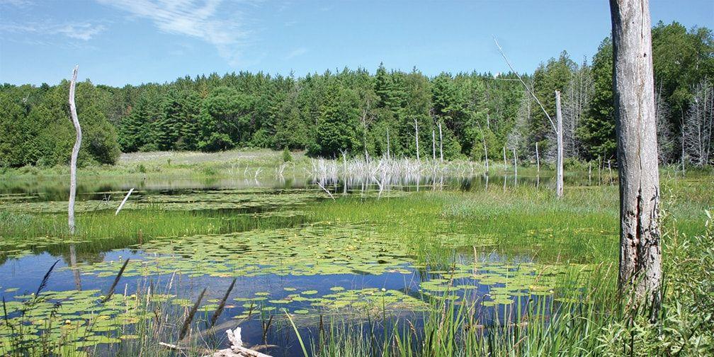 Wetland at Kinghurst Forest Nature Reserve