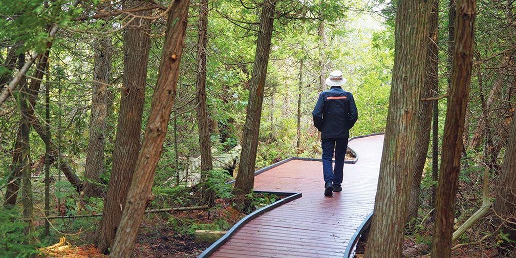 Walking boardwalk at Petrel Point Nature Reserve