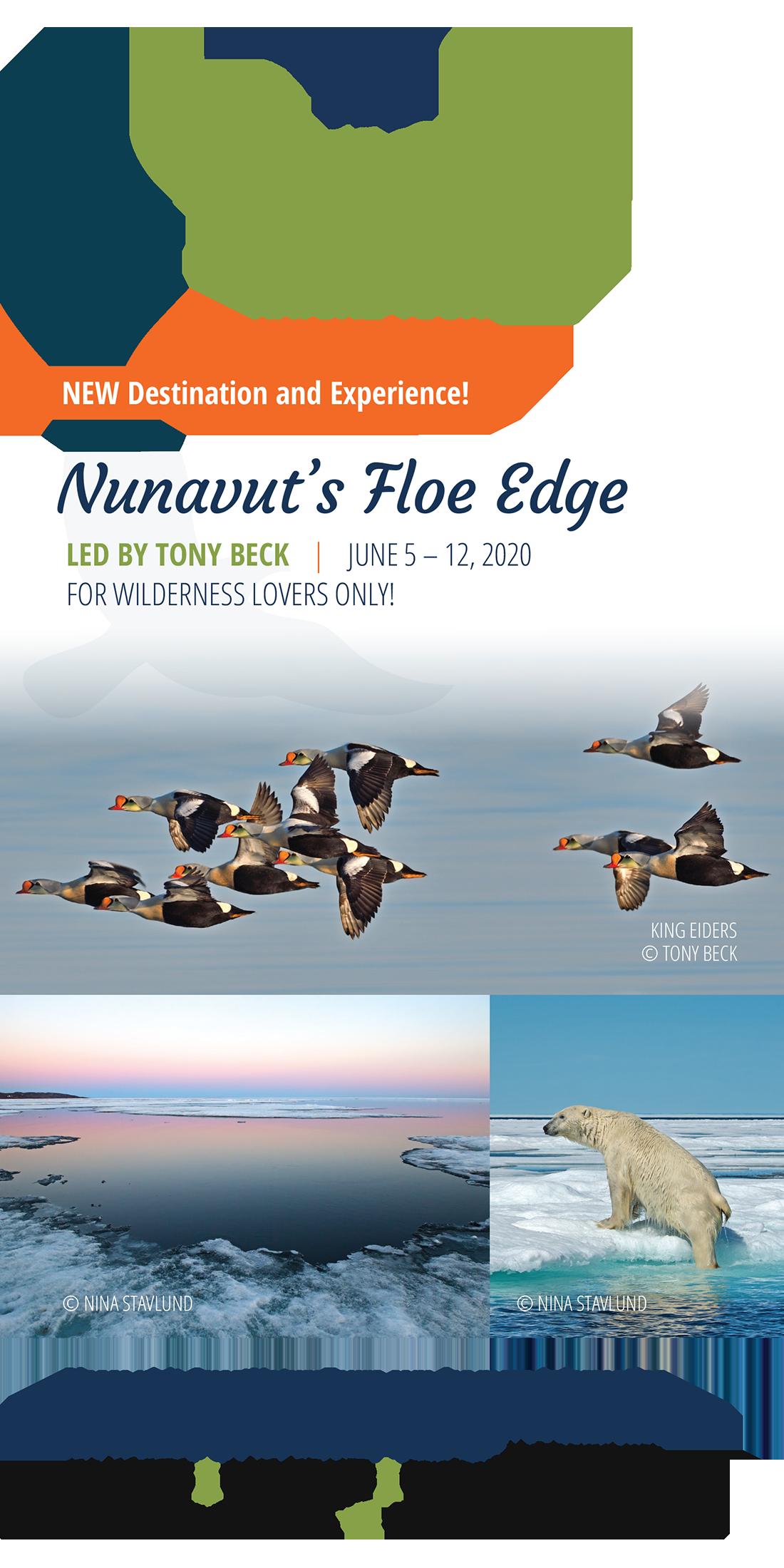 Nunavut Floe Edge - Quest Nature Tours Expedition