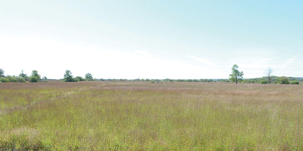 Panoramic landscape of tallgrass prairie