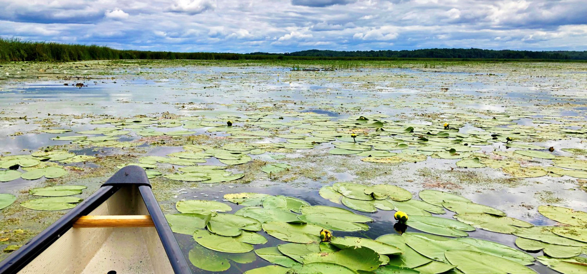 Paddling a canoe through Gananoque Lake's beautiful wetlands