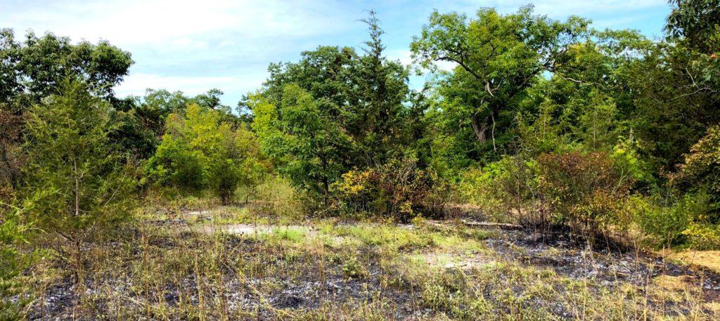 post-burn results at Stone Road Alvar Nature Reserve