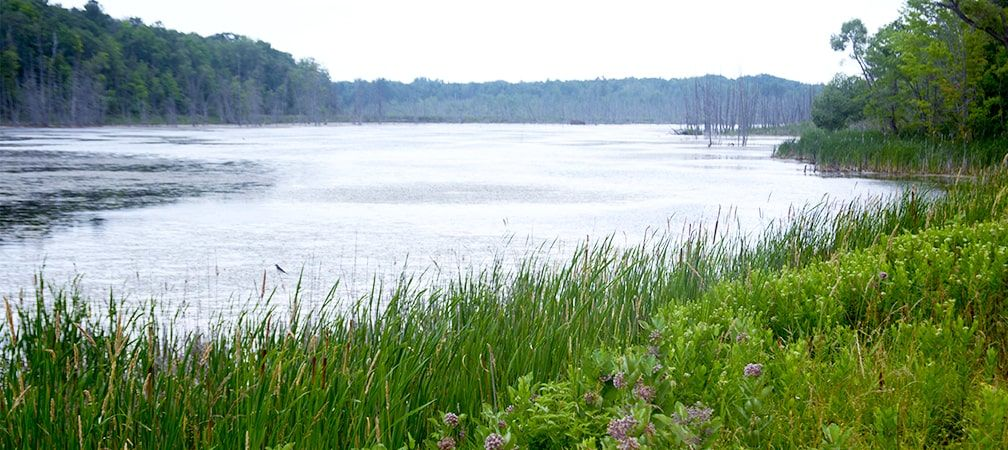 Overlooking a lake and a marshy area with trees in the distance