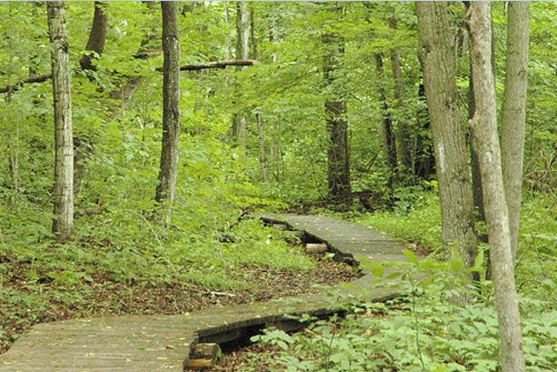 Lawson Nature Reserve boardwalk