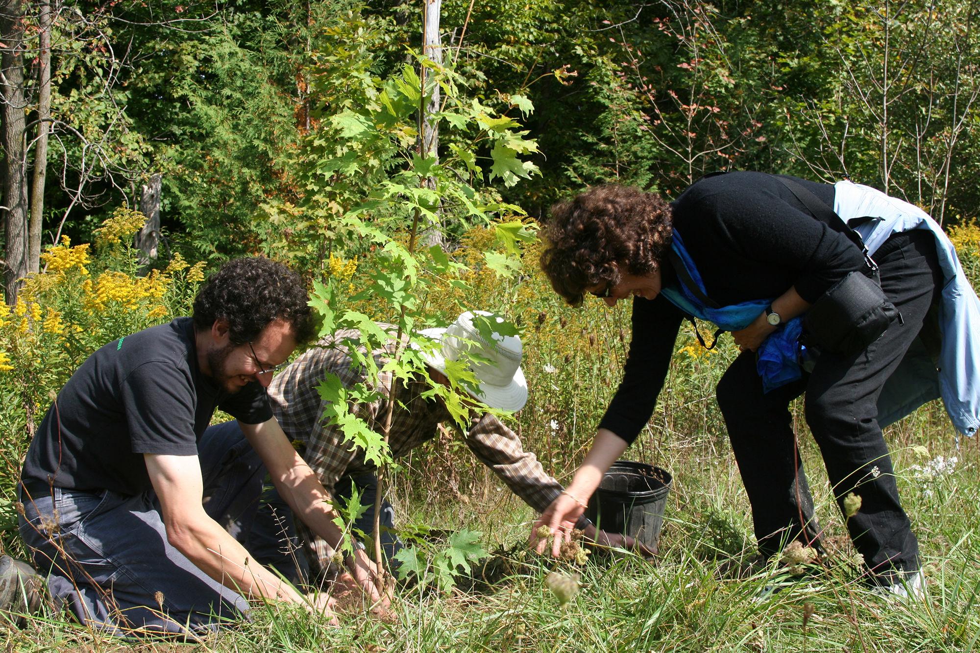 tree planting at Cawthra Mulock nature reserve