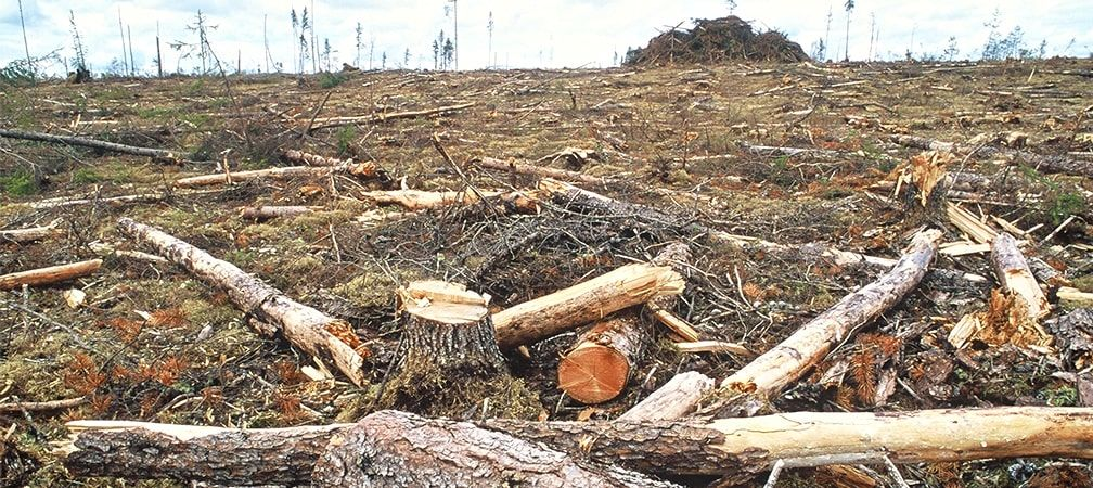 Logs and stumps left in a field after clear cutting