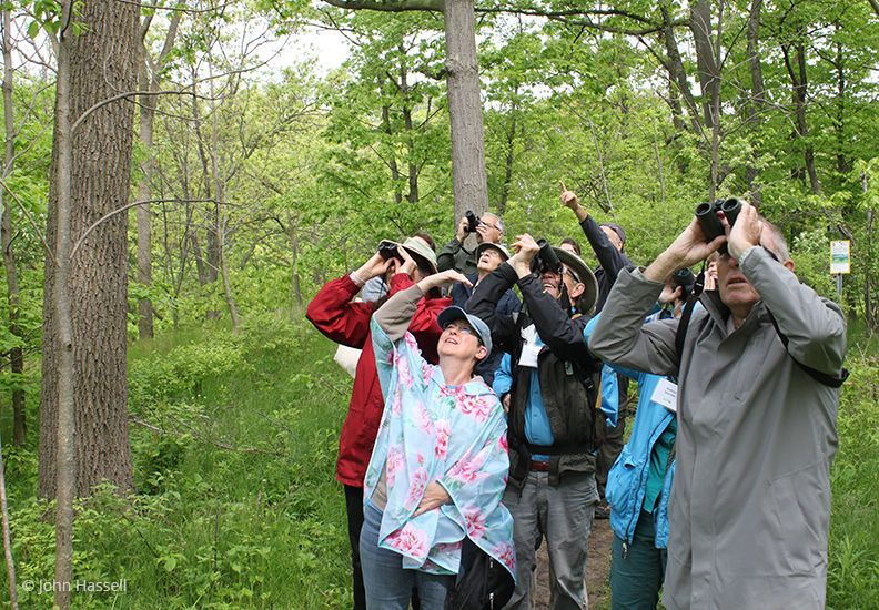 Birdwatching in Hamilton at Cootes Paradise