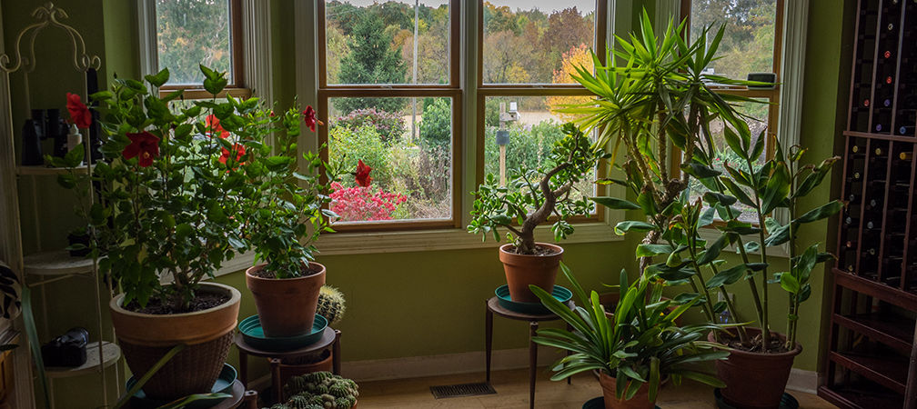 house plants by the window and autumn view