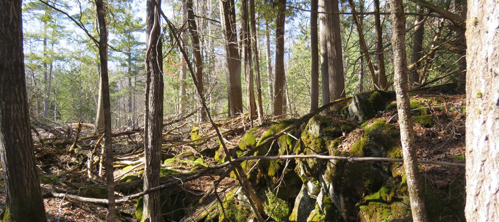 Diverse forest landscape at Jack Lake with tall conifer trees and mossy rock outcrop