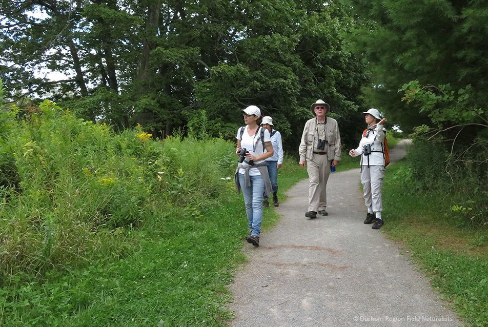 Durham Region Field Naturalists, nature hike at Samuel Wilmot Natural Area