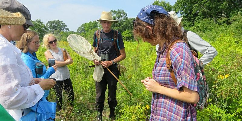 Butterfly identification workshop, Stone Road Alvar Nature Reserve