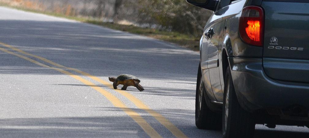 Wildlife and habitat at risk