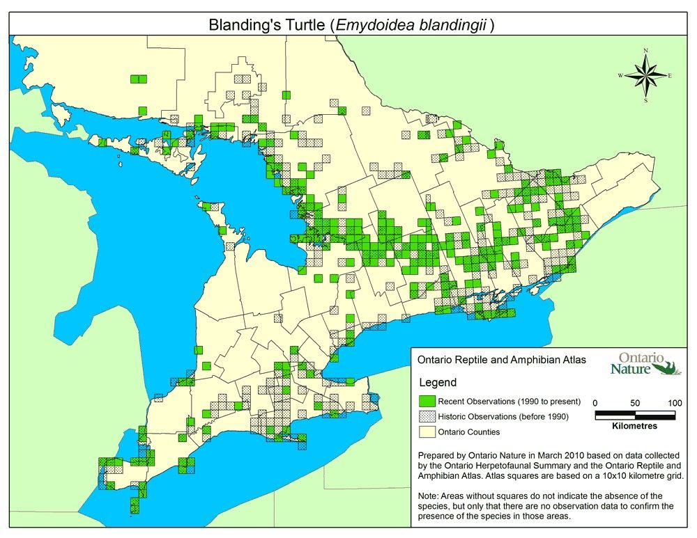 Blanding's turtle range map from 2010, Ontario Reptile and Amphibian Atlas