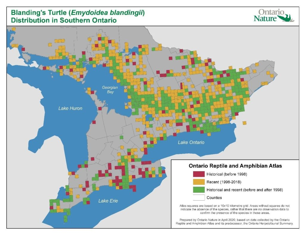 Blanding's turtle range map from 2020, Ontario Reptile and Amphibian Atlas