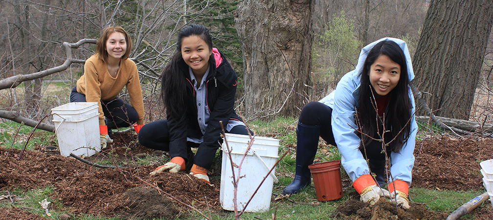 Planting trees in Taylor Creek Park