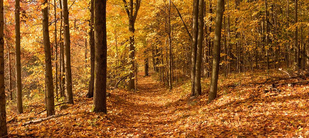 Forest path an beautiful autumn foliage