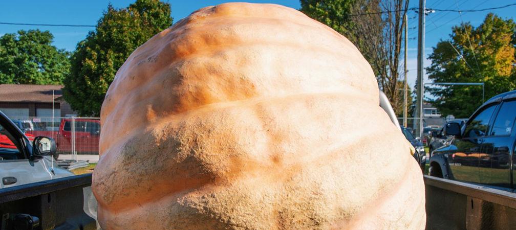 Giant pumpkin, Port Elgin