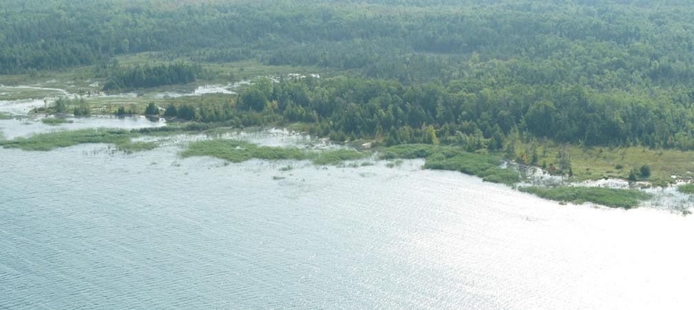 Baie du Doré Phragmites patch