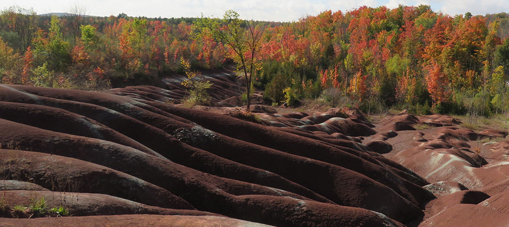 Autumn forest and the Cheltenham Badlands