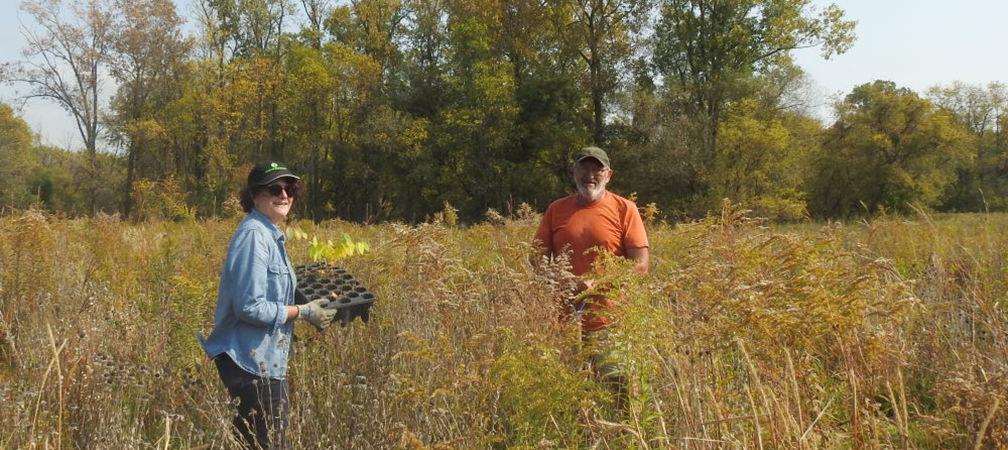 Volunteers helping to restore habitat, Sydenham River Nature Reserve