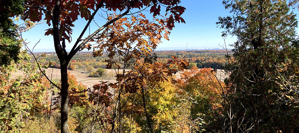 Panoramic view above Halton Region forests