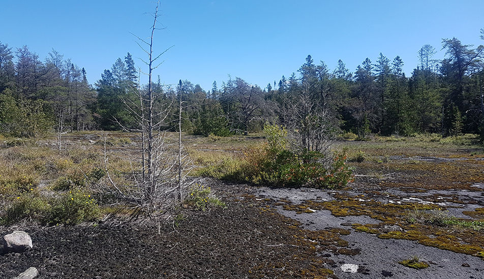 Bruce Alvar Nature Reserve , Saugeen-Bruce Peninsula