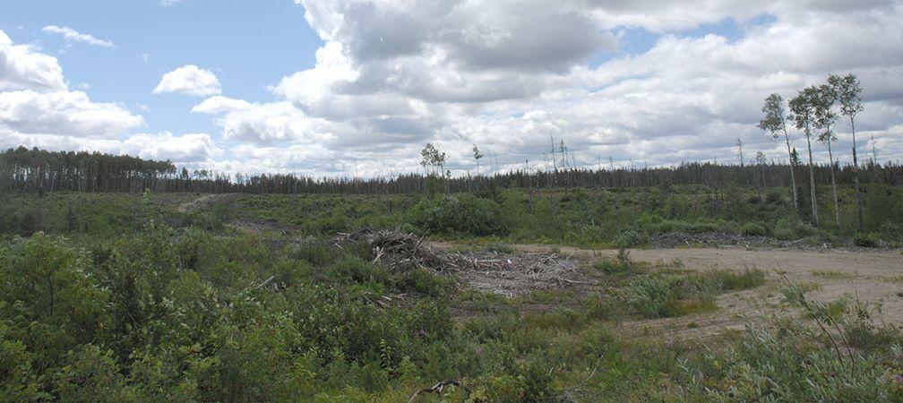 Clear cut near Ogoki Forest in Ontario